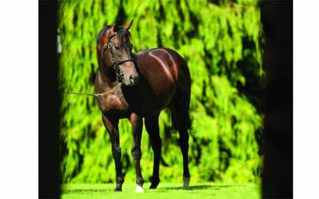 14th Individual Group 1 Win For Invincible Spirit
