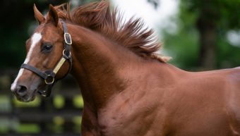 Another winner for first season sire Decorated Knight