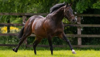Nazeef Lands Group 1 Falmouth Stakes