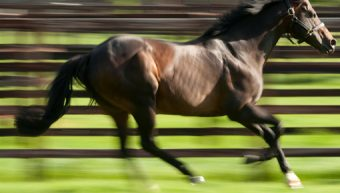 Mayson son of Invincible Spirit sires Group 1 winner