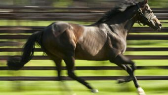 7 winners in 2 days for Invincible Spirit