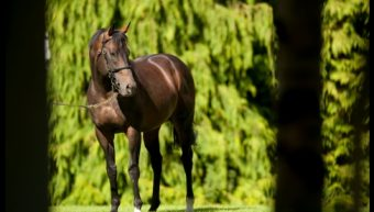 Invincible Spirit Lives On Through Top Australian Son