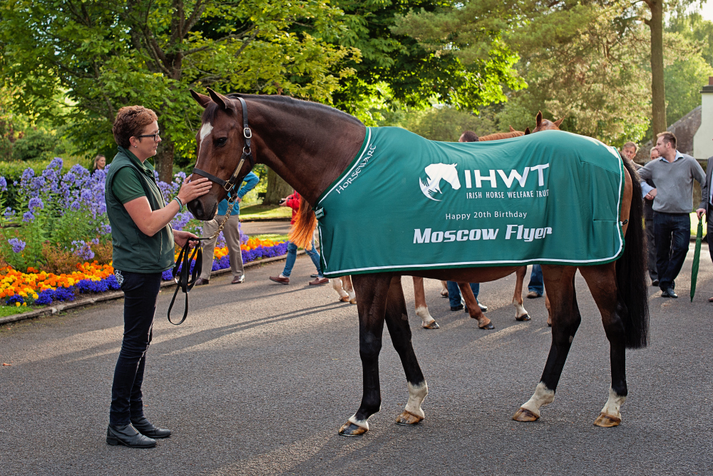 Irish National Stud: IHWT And INS Celebrate