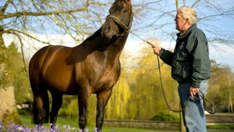 Invincible Spirit Pedigree