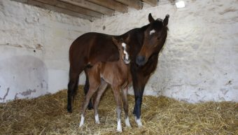 Free Eagle's first foal has landed!