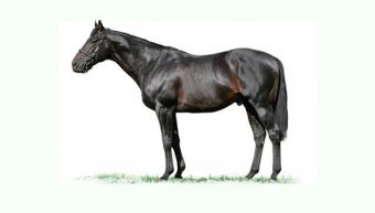 2 Winners in 3 Days for Elusive Pimpernel