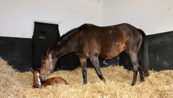 Queen Quevega has foaled!