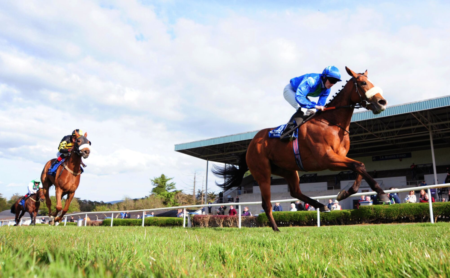 Irish National Stud: An Exciting Year Ahead For The Breeding & Racing Club