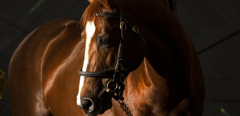 Decorated Knight Goffs Orby Yearlings