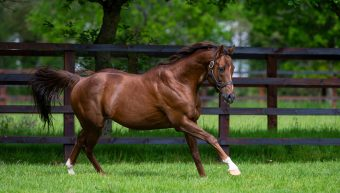 Spirit Noir latest Black Type colt for Dragon Pulse