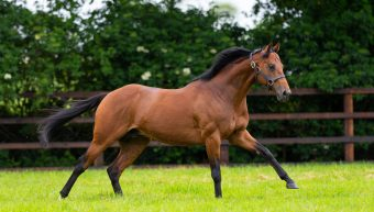 Twilight Gleaming impresses in Royal Ascot