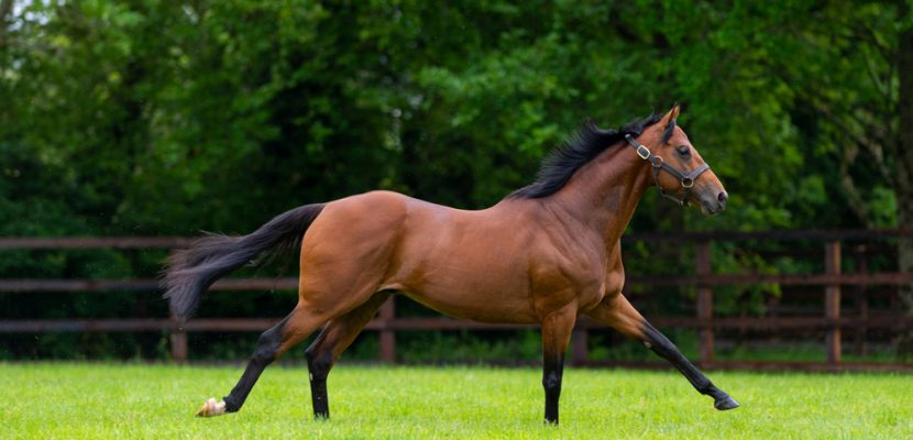 First Season Sire National Defense Impressing Top Trainers either side of the Ocean
