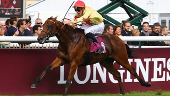 Sun Stud mares lined up for National Defense
