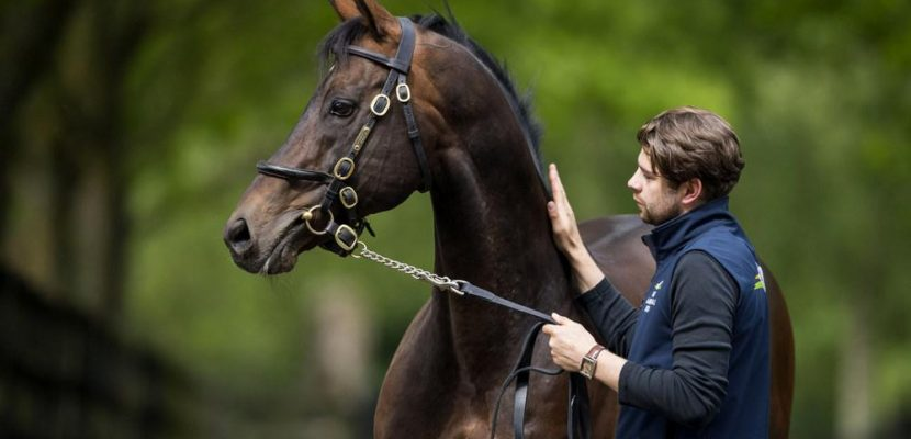 The success of Invincible Spirit's Progeny at the Yearling Sales