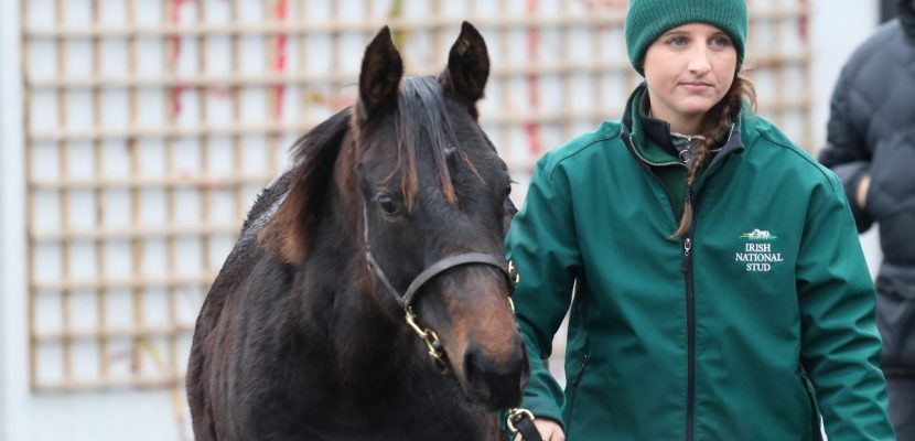 More Success for INS Breeding & Racing Club