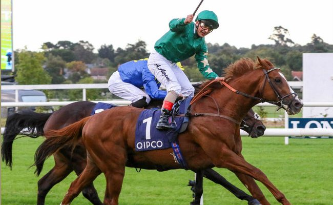 Decorated Knight – Leading 1st year Covering sire