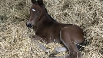 It's a Girl! First foal for National Defense