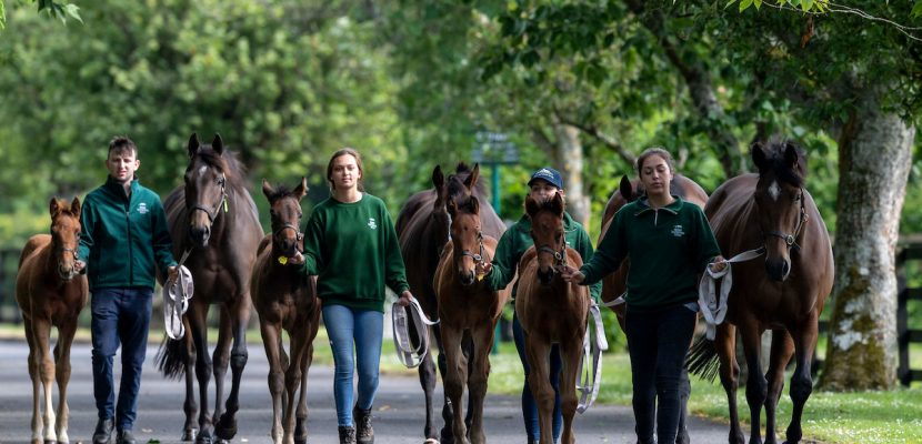 Appointments to the Board of the Irish National Stud Company Ltd.