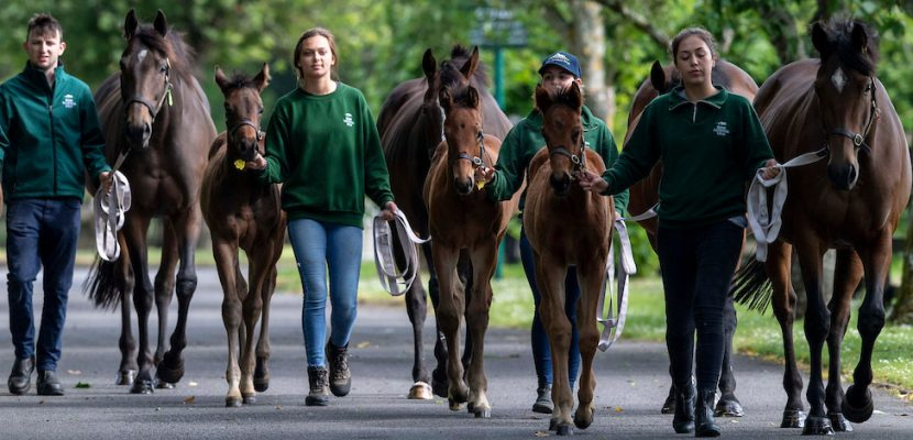Irish National Stud & Gardens  reopens its doors to Annual Members