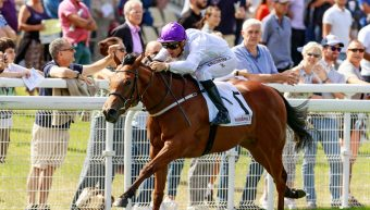 Racehorses Announced for INS Racing 2020