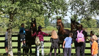 Irish National Stud & Gardens re-opens its doors to the General Public