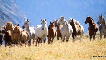Equine-Assisted Psychotherapy and the Thoroughbred