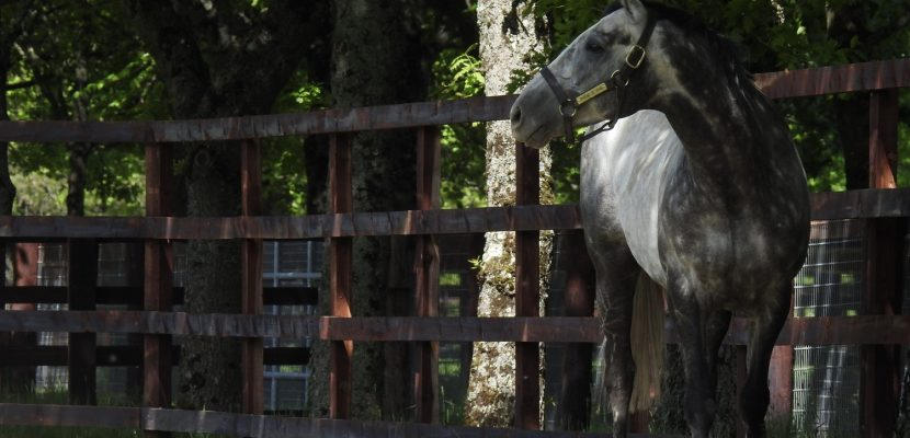 Phoenix of Spain covers Quality First book of mares