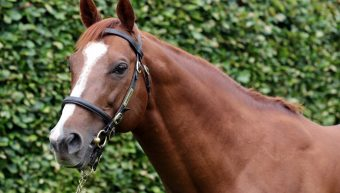 Decorated Knight First Yearlings at the Sales