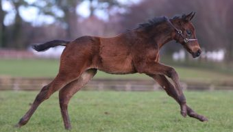 Mare Syndicate Success at the Sales