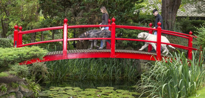 Irish National Stud & Gardens to extend visiting season until December 13th