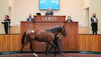 Irish National Stud Sell Top Lot at Goffs Orby