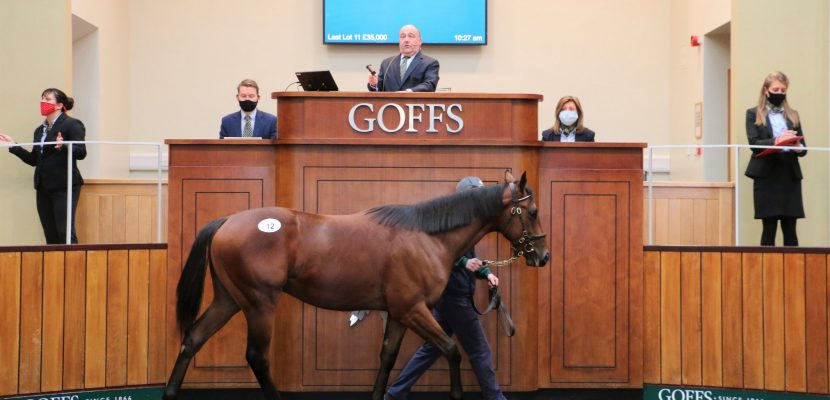 Mare Syndicate enjoy Success at Goffs Orby Sale