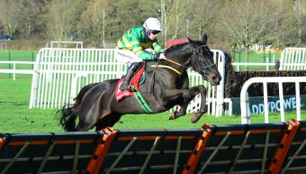 Thedevilscoachman & Glory And Honour maiden hurdle winners