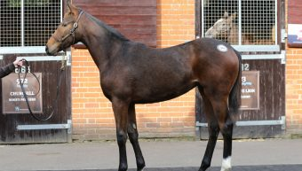 Another successful foal sale for Invincible Spirit