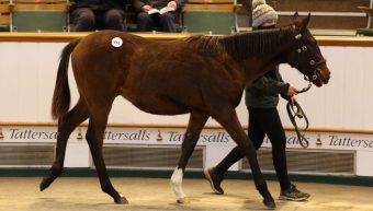Phoenix Of Spain's brother sells for 300,000gns at Tattersalls