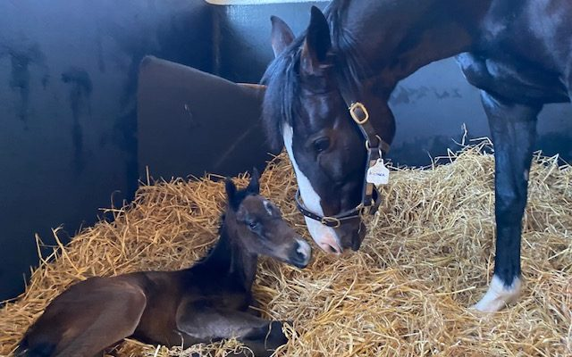 First Foal for Phoenix of Spain!