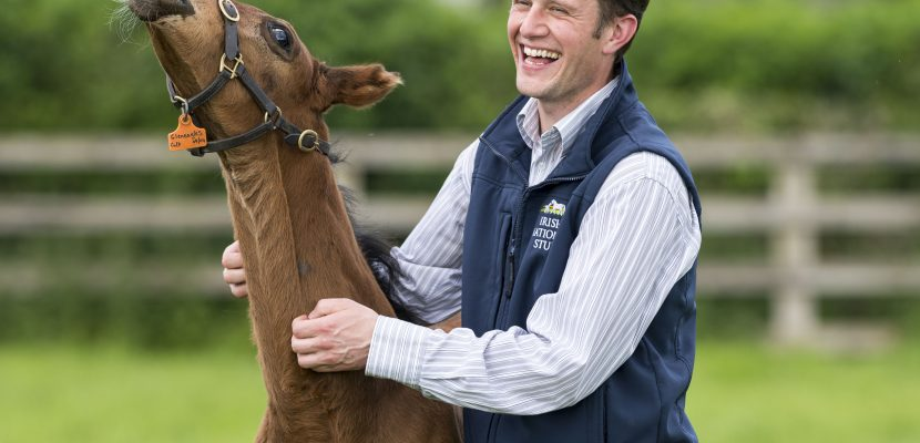 Irish National Stud 50: Beale's journey from graduate to CEO (Extract from Irish Field)