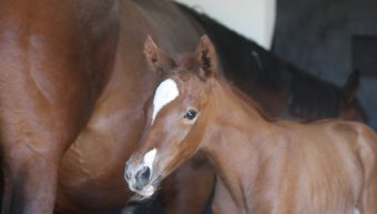 Ever dreamed of purchasing a share in a foal by Classic winner Phoenix Of Spain