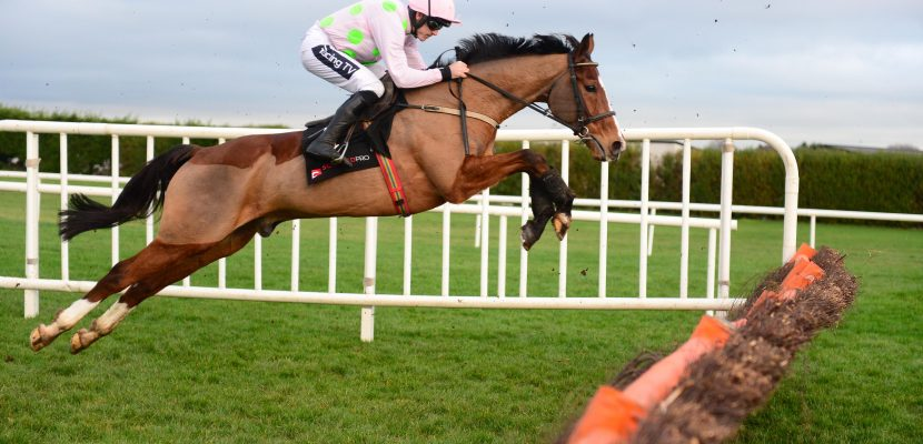Faugheen joins the 'Living Legends' Team at the Irish National Stud