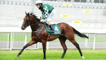 Lucky Vega to stand at the Irish National Stud